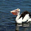 Pelikan's Abendessen Zeit von Evita