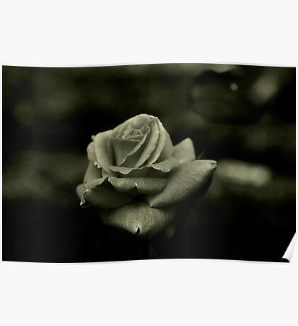 Monochrome Rose Poster