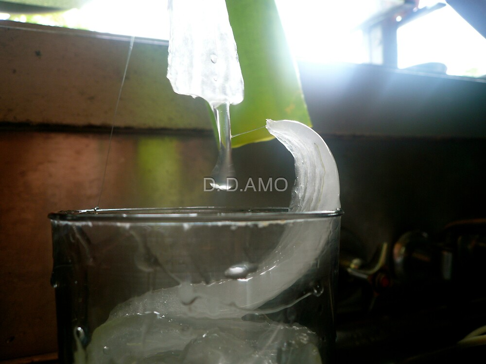 Aloe Moment by D. D.AMO