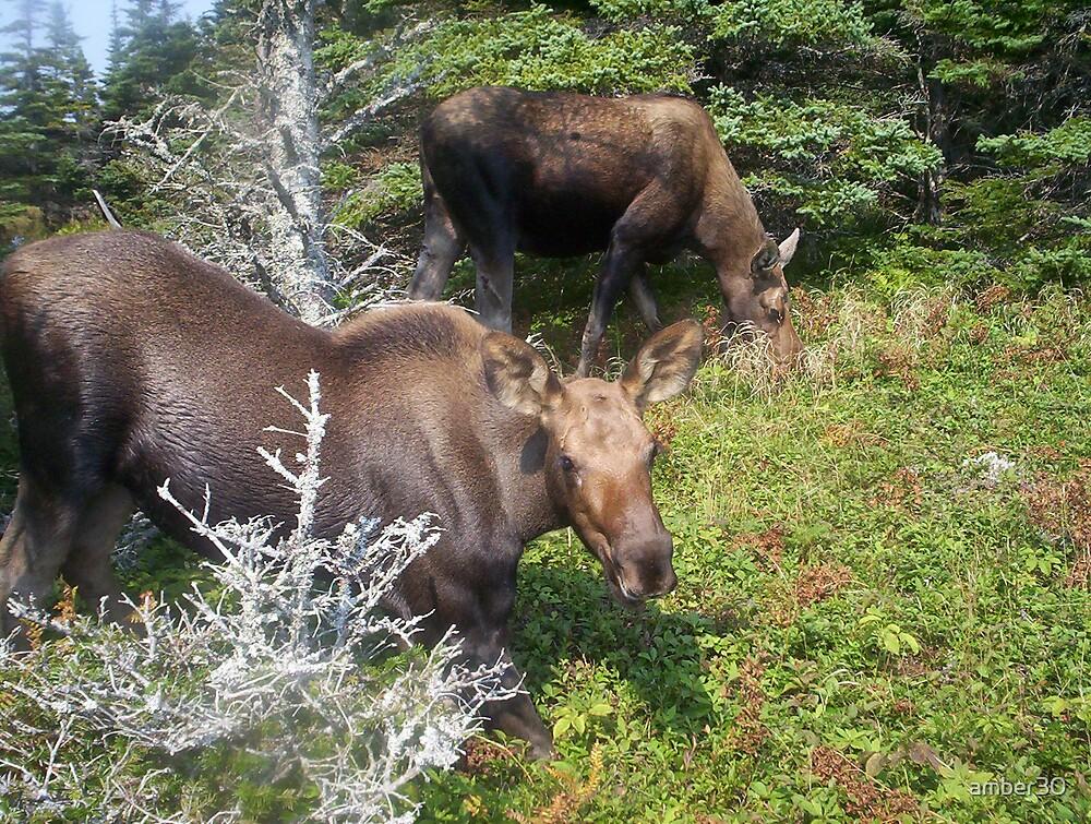 da moose by amber30