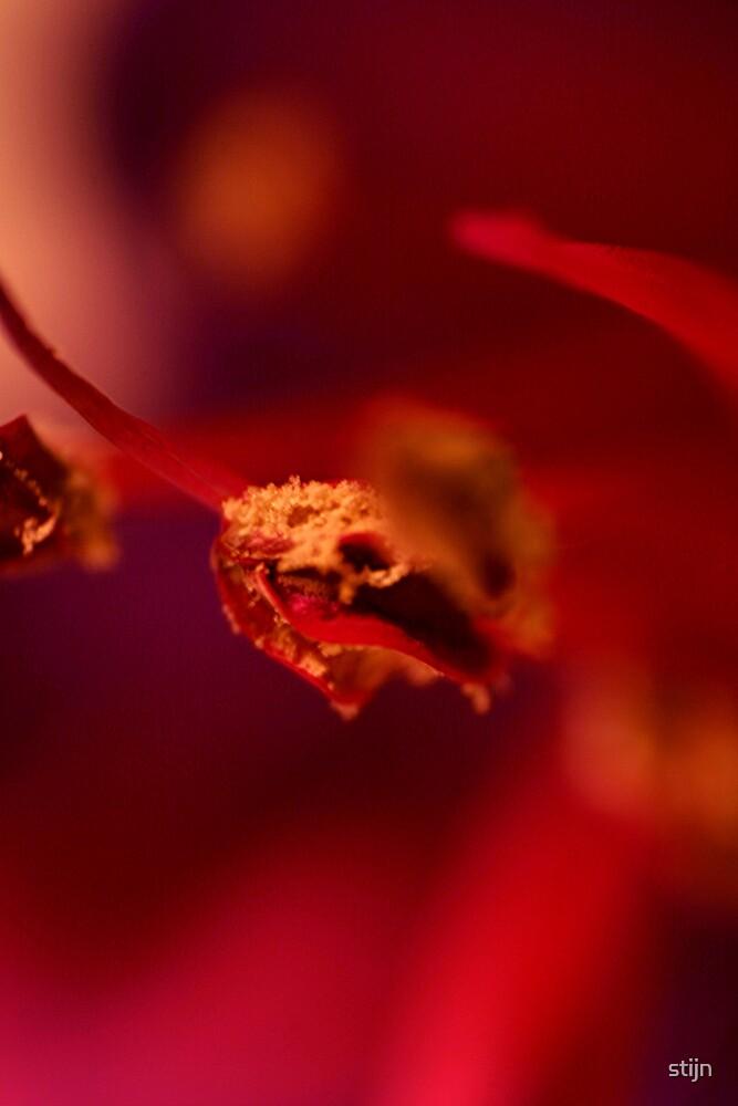 In Focus Flower Head by stijn