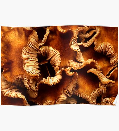 curly shrooms Poster