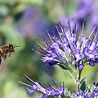 Bee-licious! by dilouise