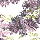 Fall asters by botanicalsbyV