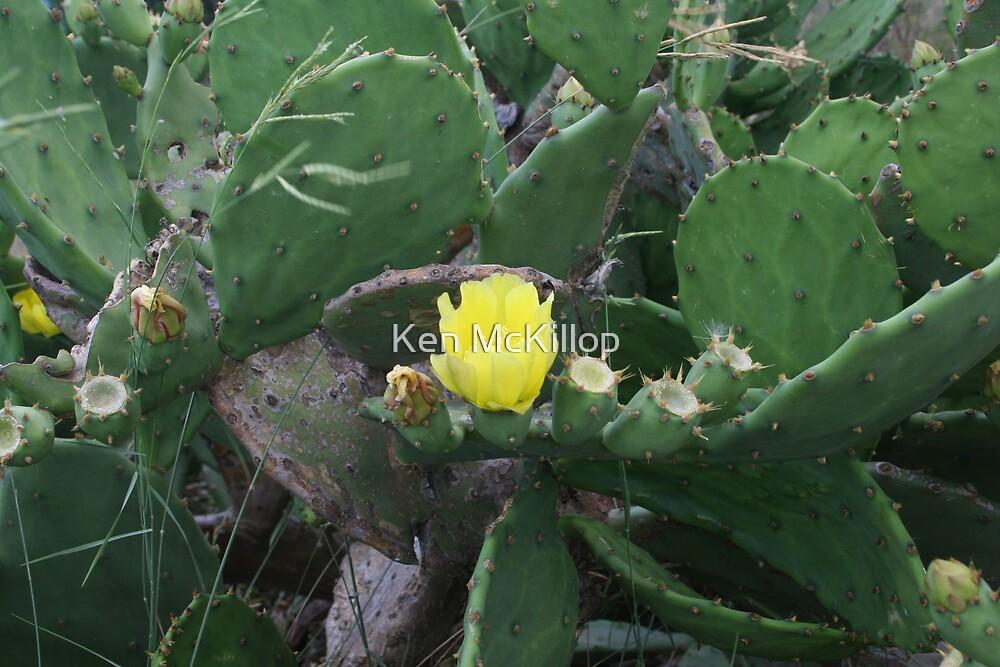cactus flower by Ken McKillop