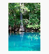 Cypress Beauty Photographic Print