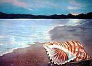 Seashell  by Linda Callaghan