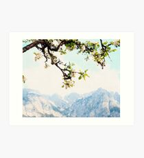 Apple Blossoms and Mountains  Art Print