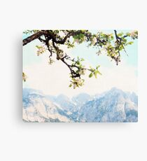 Apple Blossoms and Mountains  Metal Print