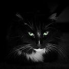 Hello darkness by Lynn Starner
