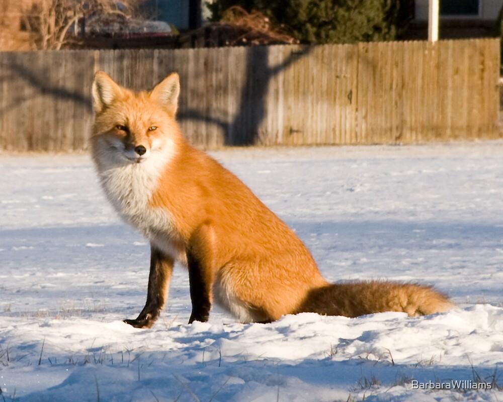 Foxy 2 by BarbaraWilliams