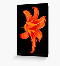 ORANGE DAY LILLY Greeting Card