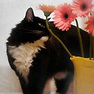 Jasper smells the flowers by Lynn Starner