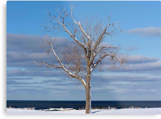 Winter Survivor by Maria Dryfhout