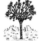 Joshua Tree (Tag) von Hinterlund