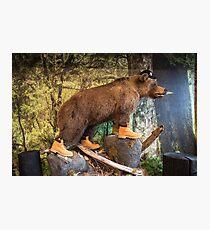 Ersine Mammal Photographic Print
