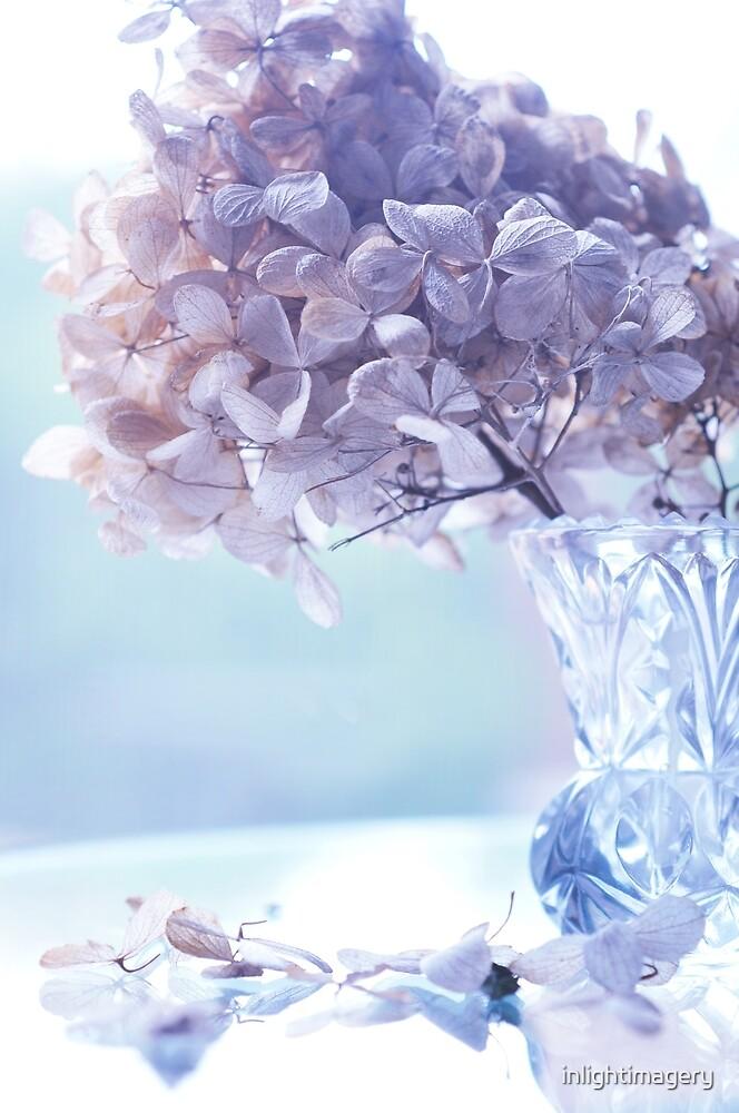 Hydrangea Joy by inlightimagery