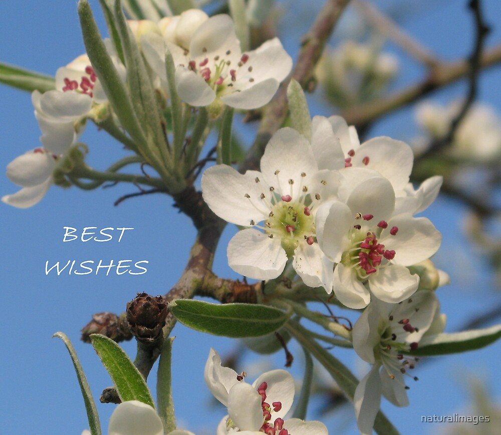 Best wishes by naturalimages
