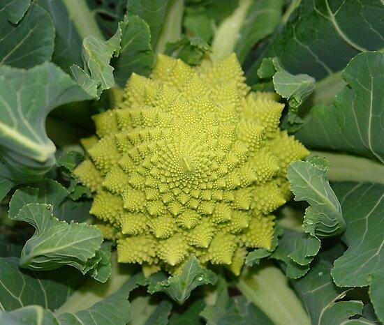 italian broccoli by dominiquelandau