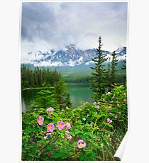 Wild roses and mountain lake in Jasper National Park Poster