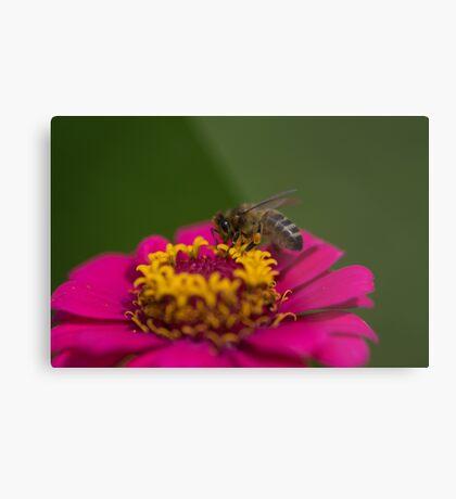 Zinnia Bee Metal Print