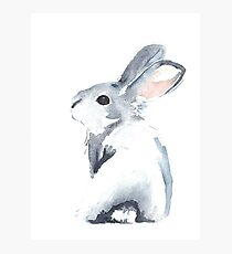 Moon Rabbit I Photographic Print