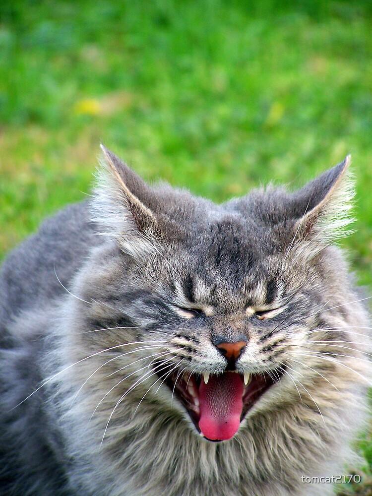 yawn by tomcat2170