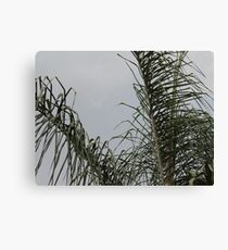 Just palm tree Canvas Print