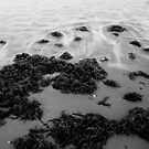Swirls of Water by Taylor Jury