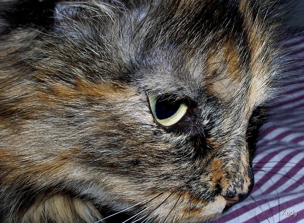 Sad cat by Kady
