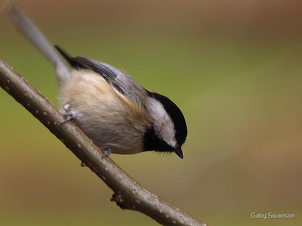 Little Bird by Gabi Swanson