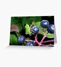 Greenfly on the berry Greeting Card