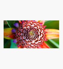 Pineapple flower Photographic Print