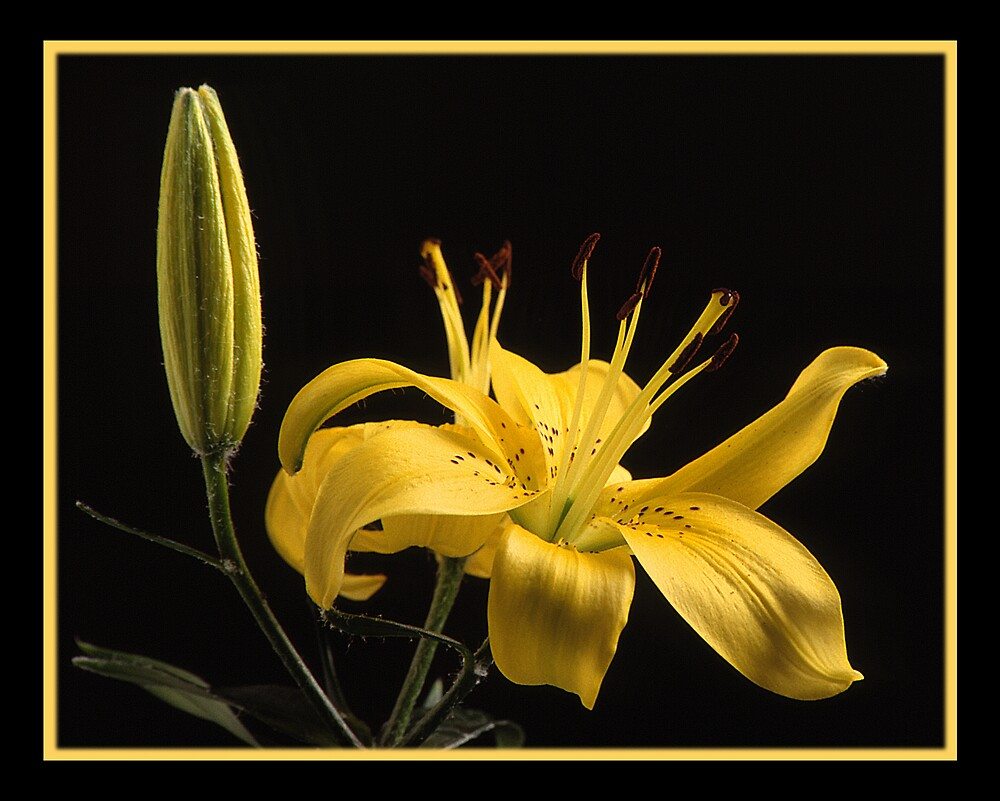 Yellow by photosunique