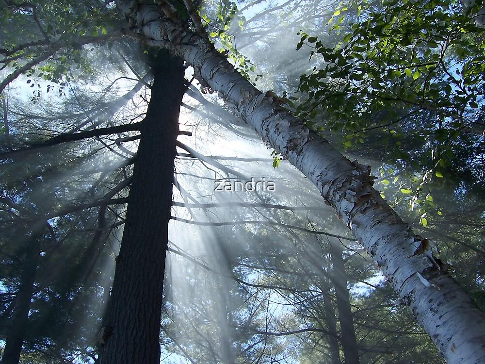Smokey Rays by zandria