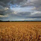 Rural landscape by annalisa bianchetti