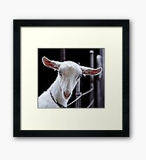 Goatic Beauty Framed Print