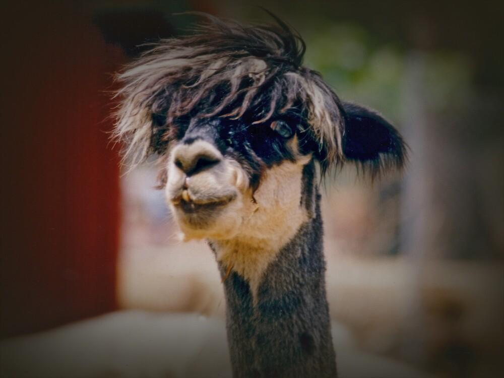 Alpaca - Bad Hair Day by Elaine Teague