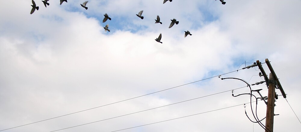 doves fly by thegorbott