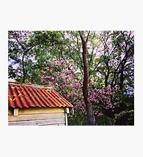 Red roof, Pink flowers. Photographic Print