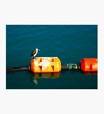 Penguin at Apollo Bay Photographic Print