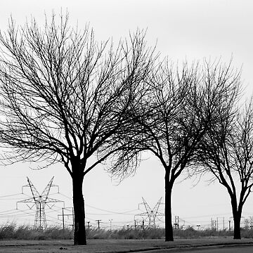 FAMILY TREES IN WINTER by bambooo
