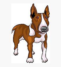 Bull terrier cartoon Photographic Print