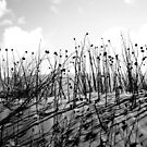 Desert Flowers in BW by Candice O'Neill