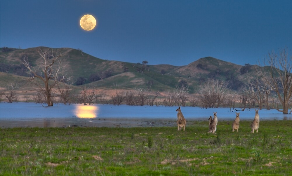 Roos in the Moonlight - part 2 by Craig Myers