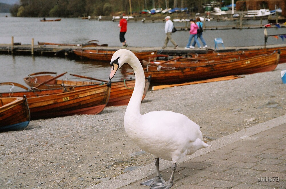 Goose and Boats by philip73