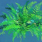 Fern, floral art, blue & green by clipsocallipso