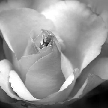 rose by eyes