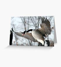 Upset Geese Greeting Card