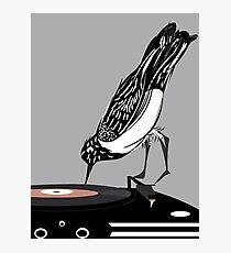 DJ magpie Photographic Print